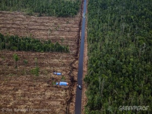 Indonesian Paper Company announces end to forest destruction