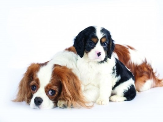 Action needed on puppy farms