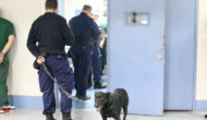 Government to start 'Body cameras' trail for  NSW prison officers